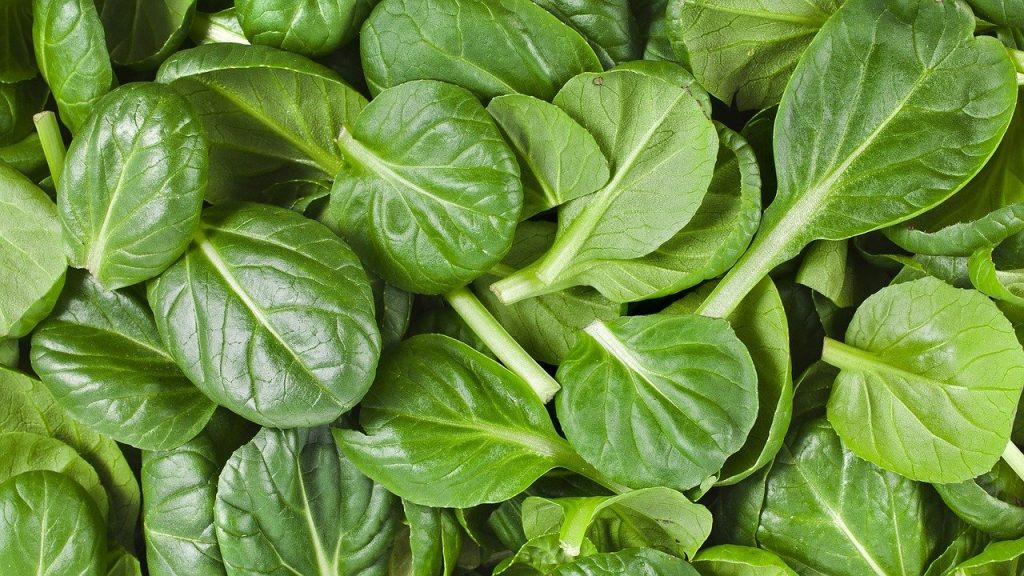 full rectangle of loose spinach